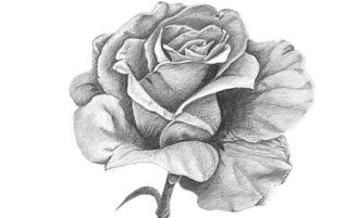 """Poema: """"Eres como una flor"""""""